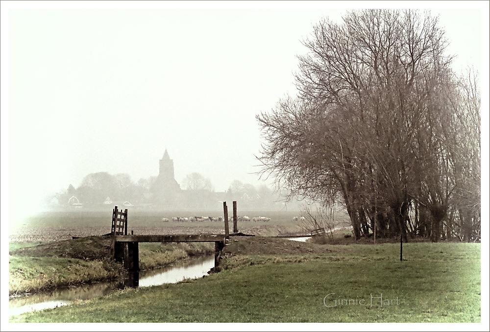 photoblog image Fog Friday