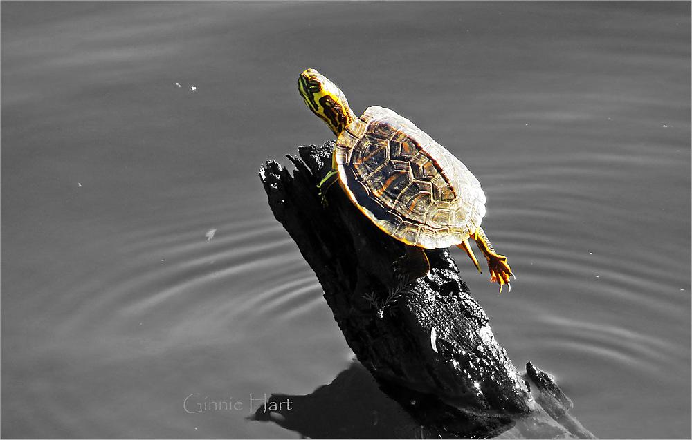 photoblog image <s>Boat</s>  Turtle Friday