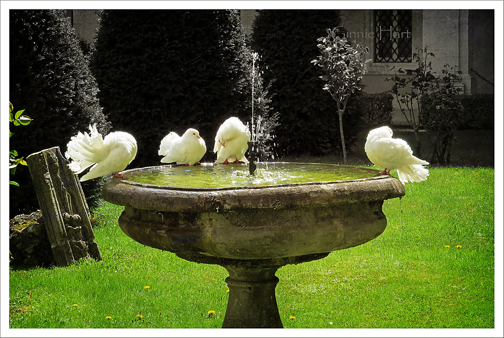 photoblog image Pentecost Monday