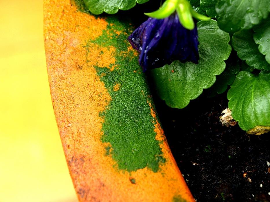 photoblog image Tiesto / Flowerpot 2