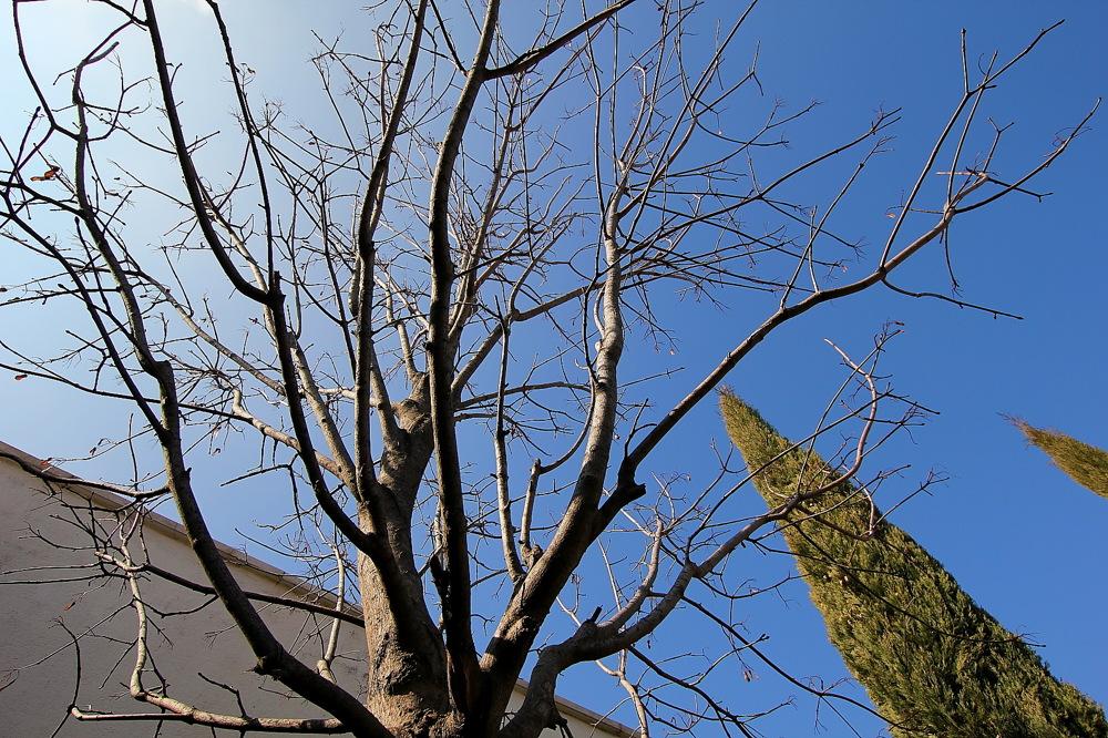 photoblog image Arce