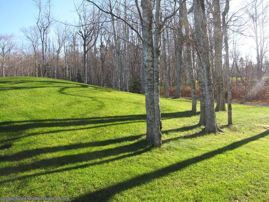 photoblog image Maple Shadows