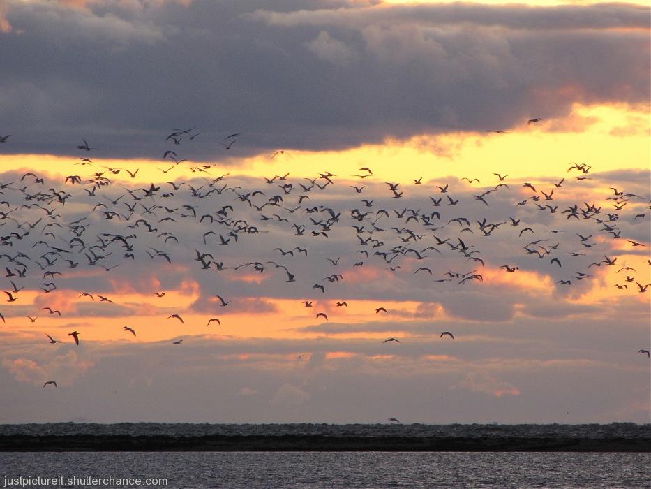 photoblog image Birds at Sunset