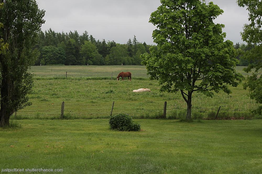 photoblog image Horse Country