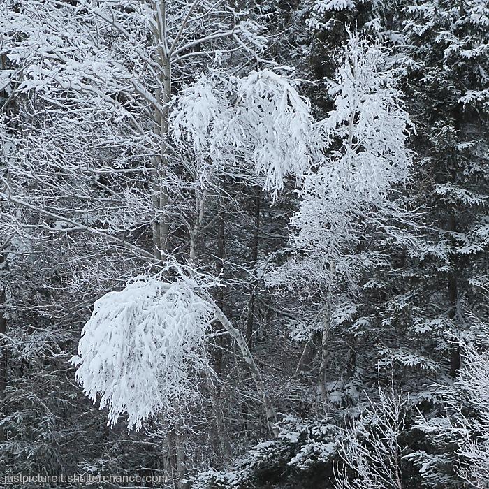 photoblog image Snow is White
