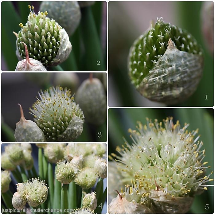 photoblog image Making Seeds