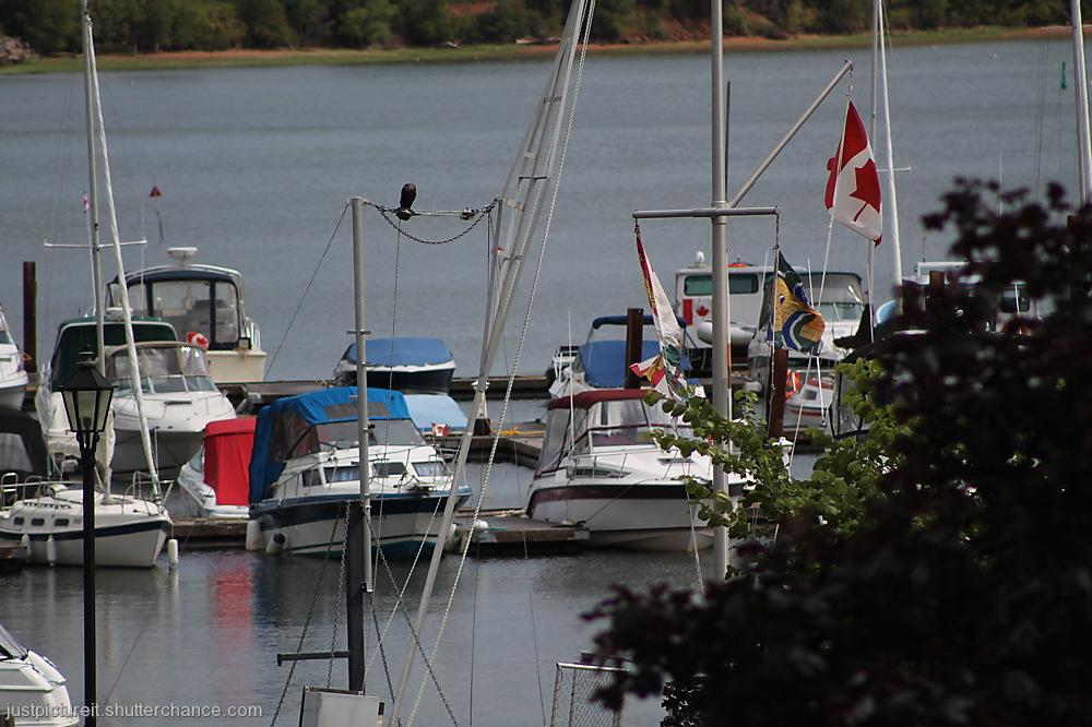 photoblog image Montague Harbour
