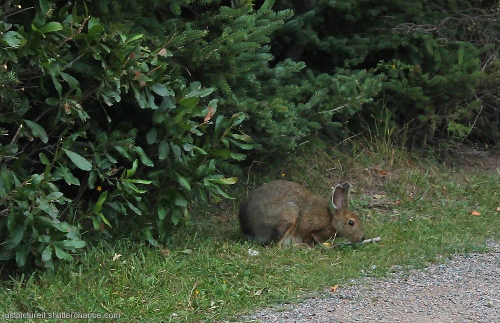 photoblog image Brown Bunny