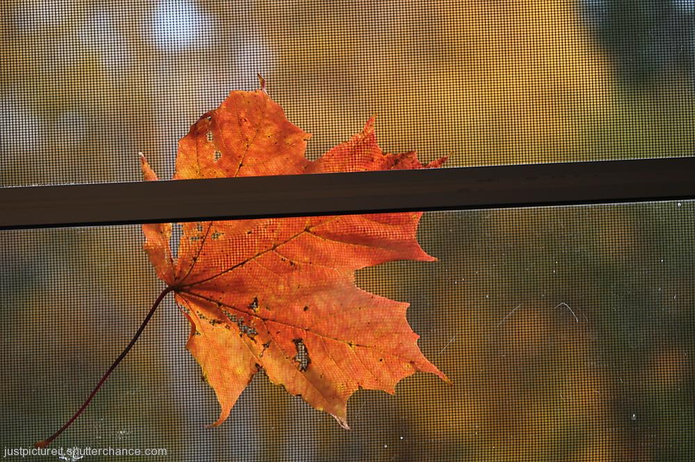 photoblog image Happy Halloween