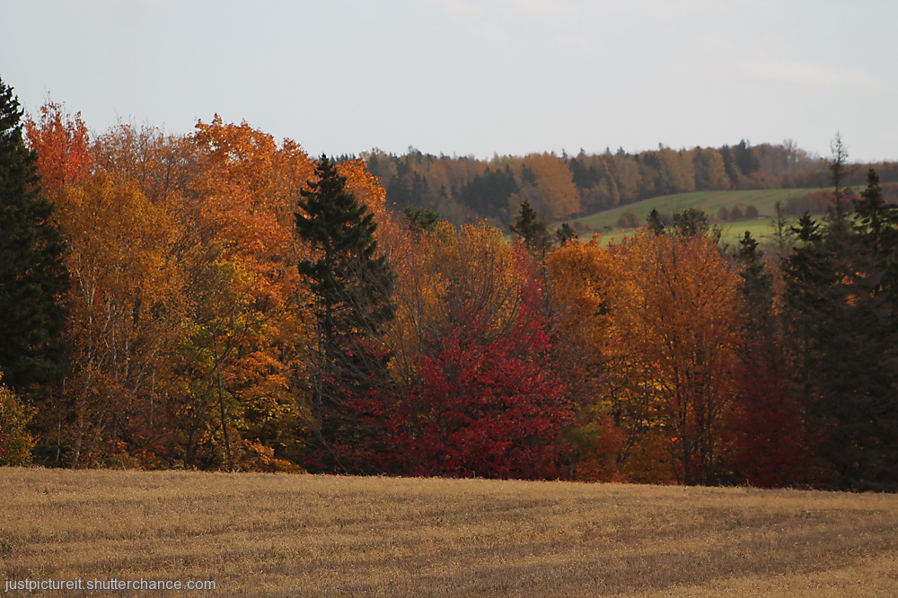 photoblog image Autumned Areas