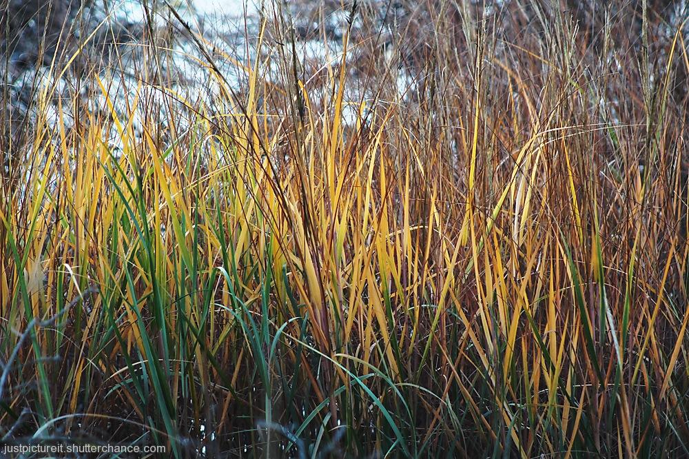 photoblog image Whispering Grass