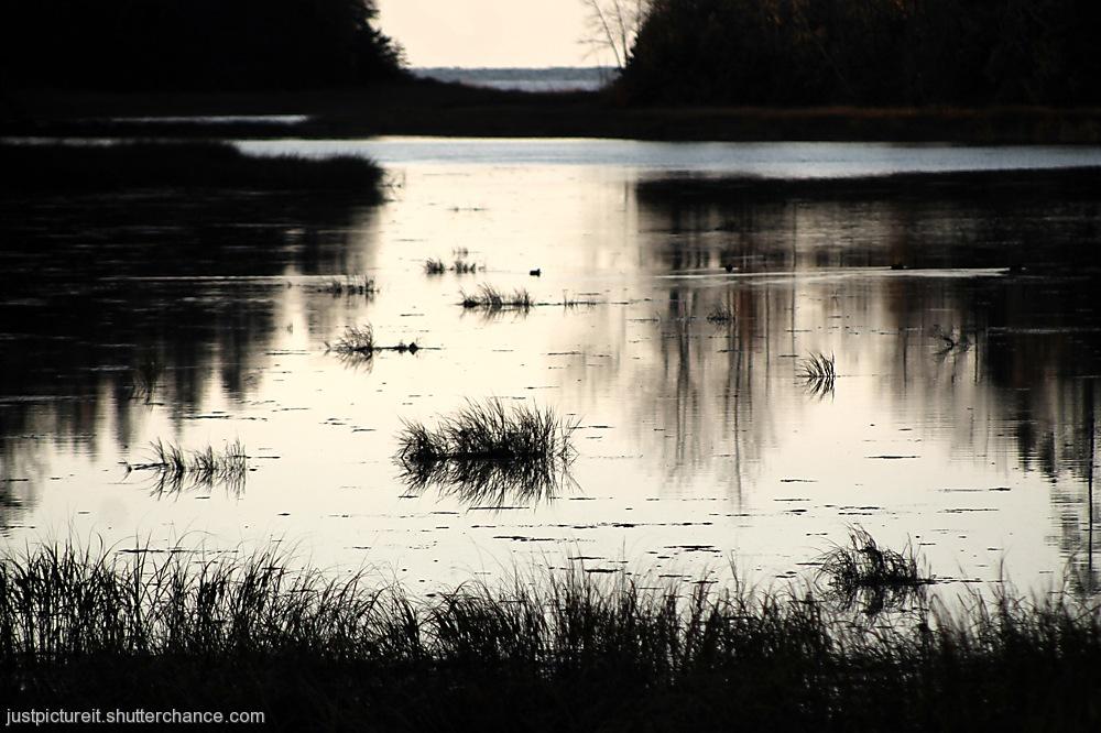 photoblog image Land of the Birch
