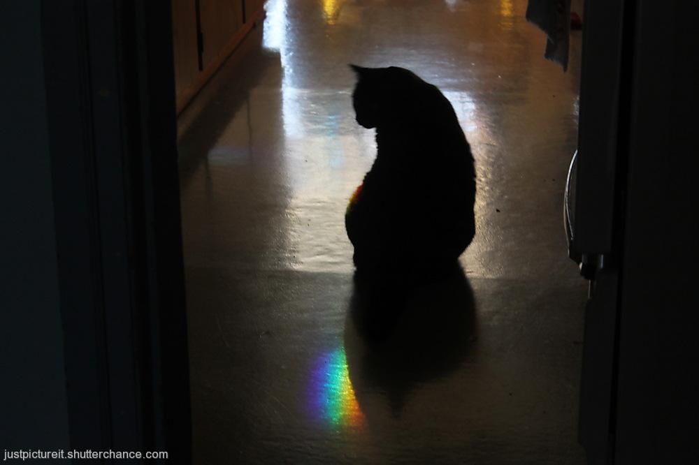 photoblog image Rainbowed Ruby