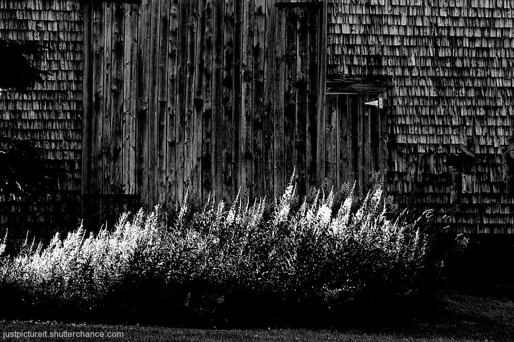 photoblog image July Scene