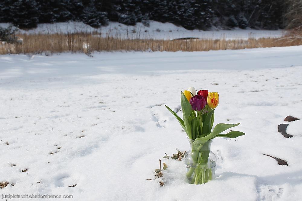 photoblog image Winter Bouquets