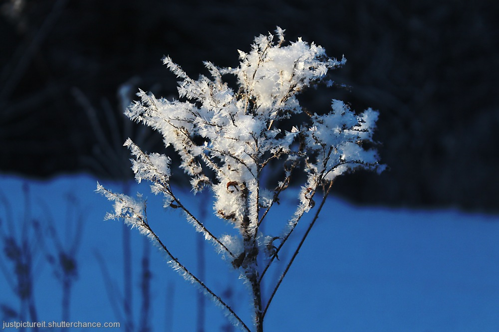 photoblog image Frosty and Snowy