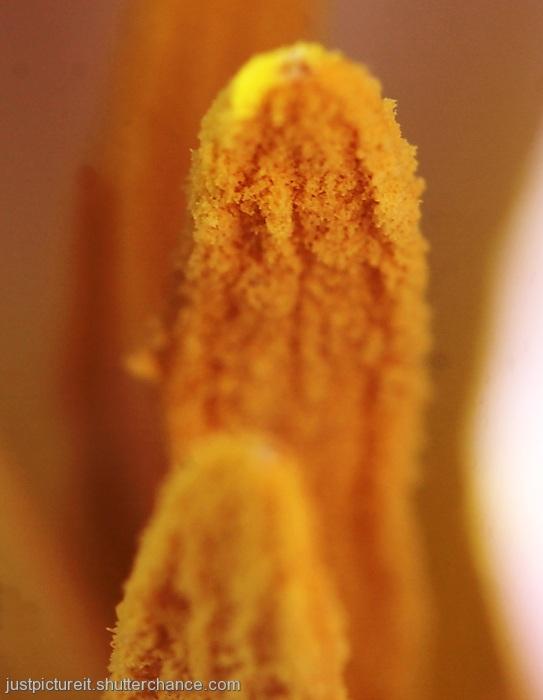 photoblog image Pollen Pleasure