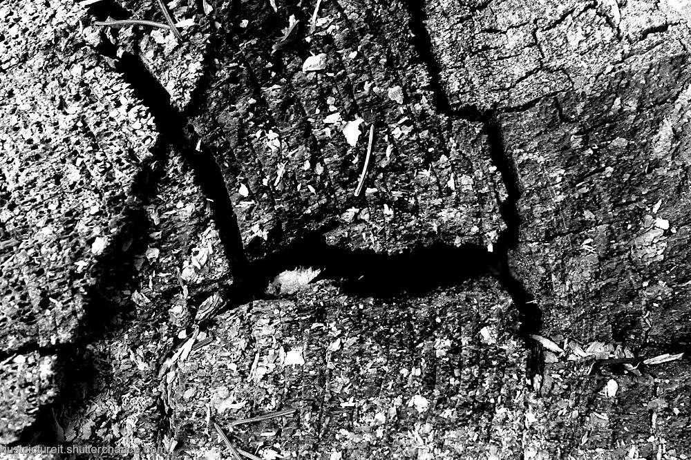 photoblog image Ant Damaged Wood
