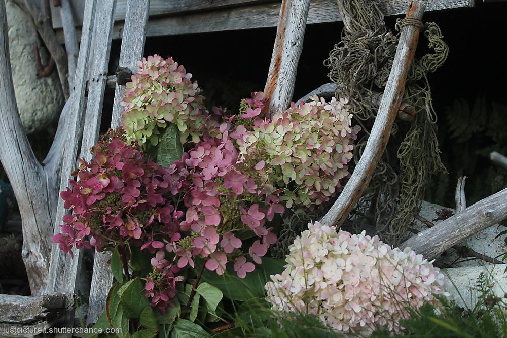 photoblog image Autumn Bouquet