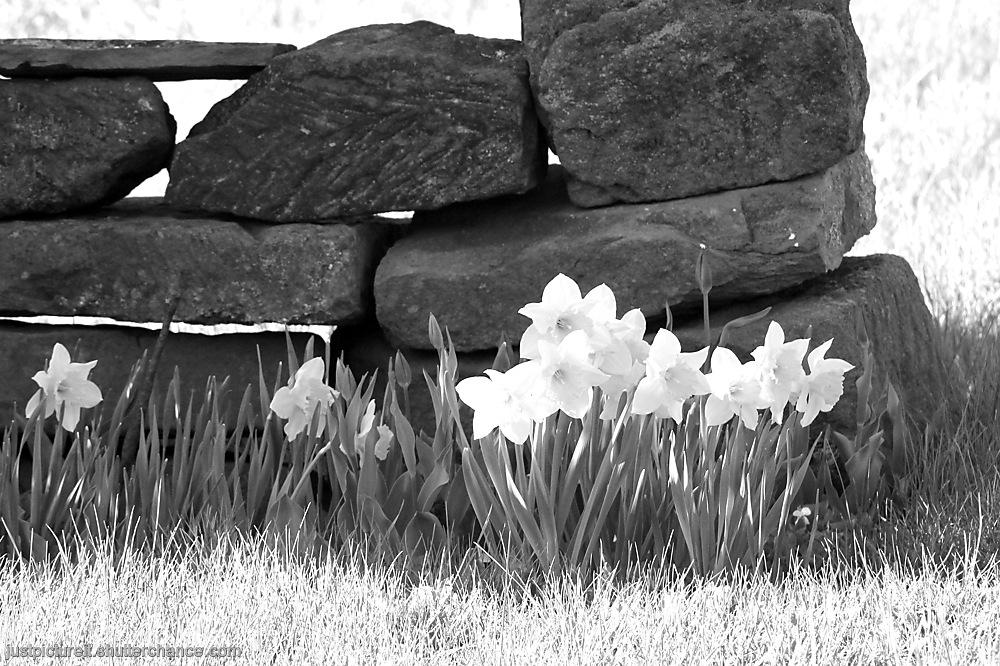 photoblog image Wild World