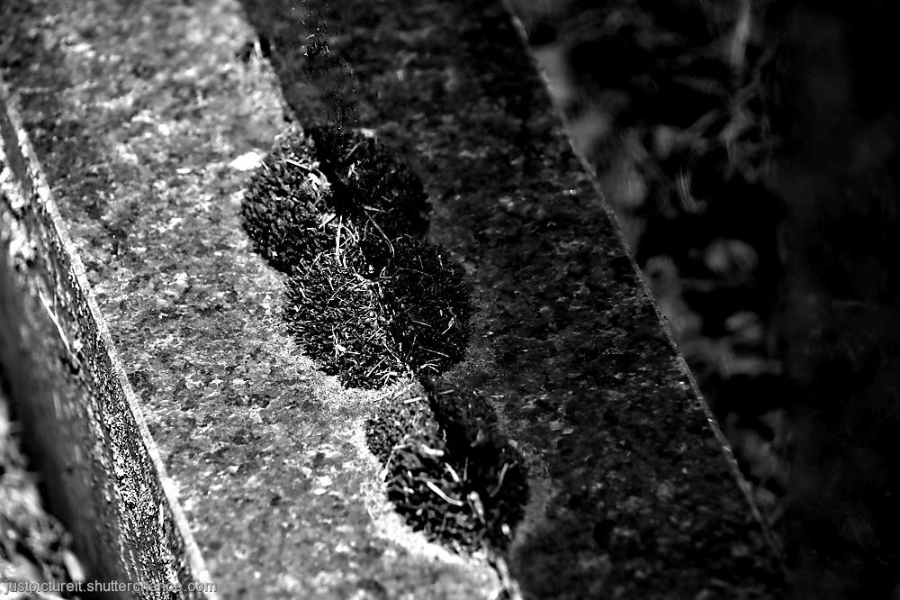 photoblog image Reflection on Stone