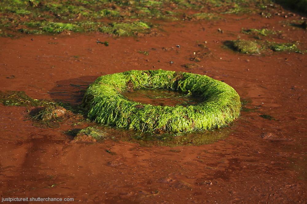photoblog image Gorgeous Green Garbage