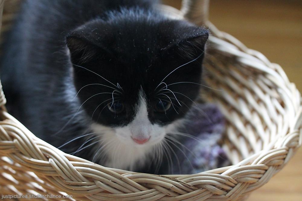 photoblog image Long Lashes