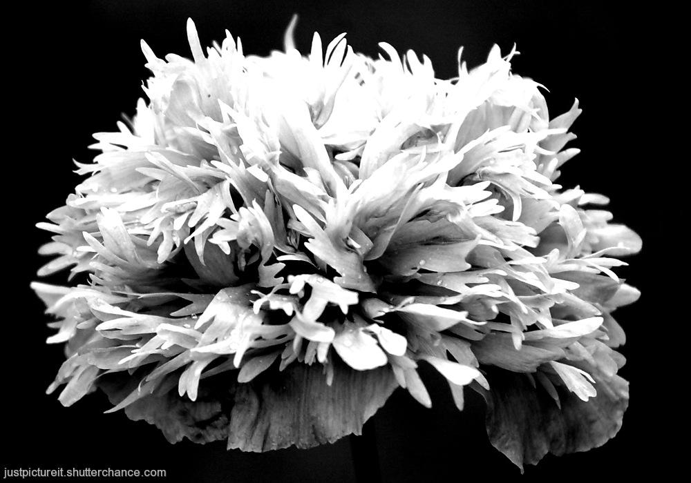 photoblog image Shape and Form