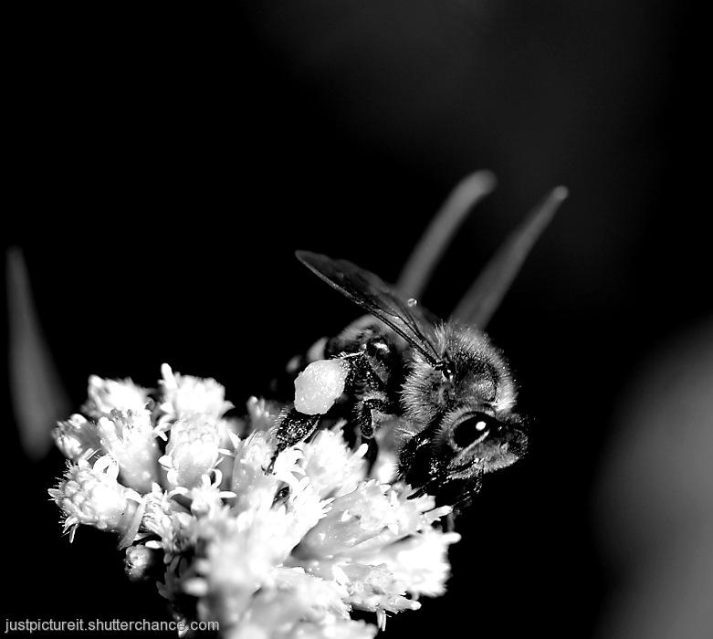 photoblog image Bee Bops