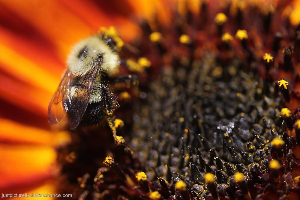 photoblog image Bees are Buzzin'