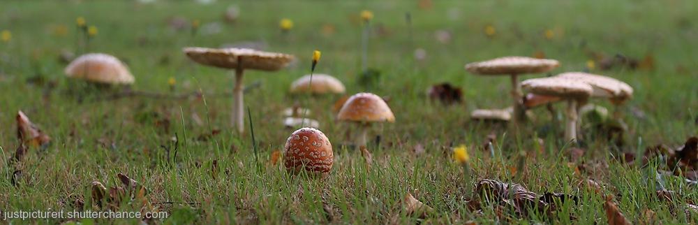 photoblog image Mushroom Village