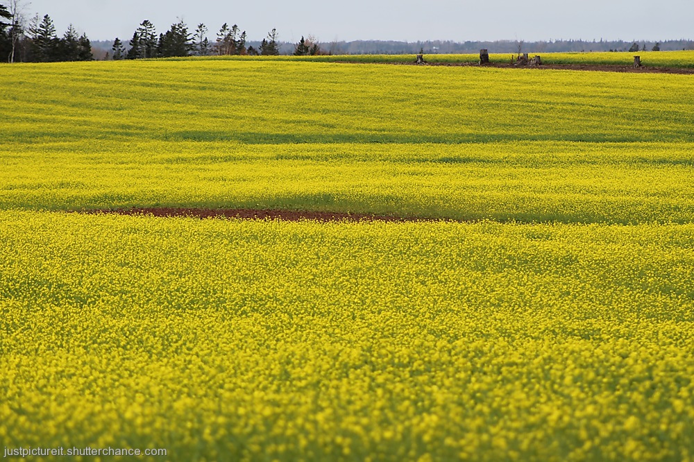 photoblog image Yellow Day