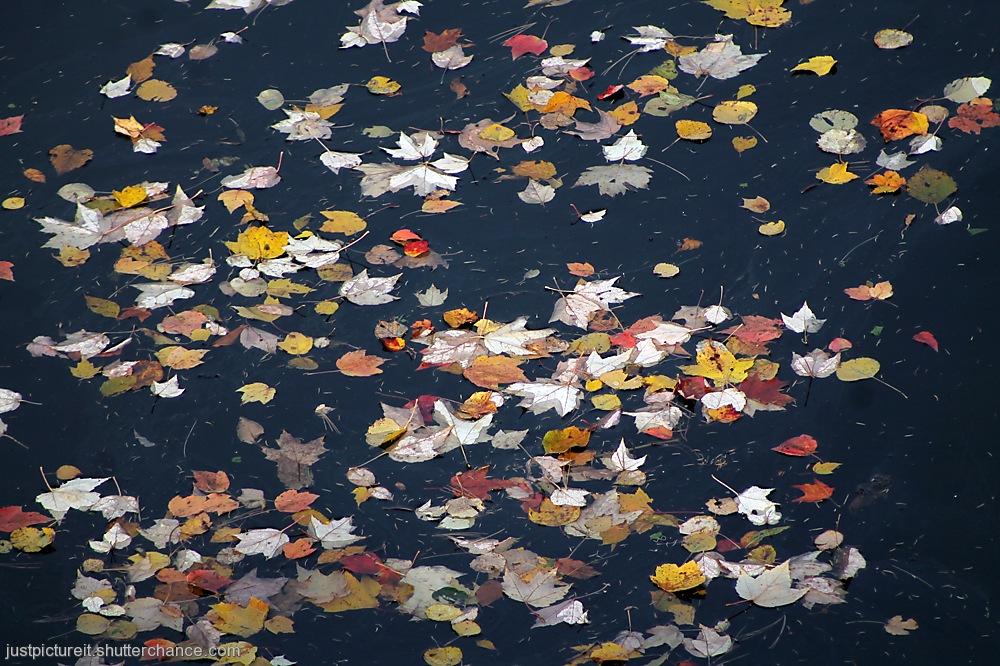 photoblog image River Floaters