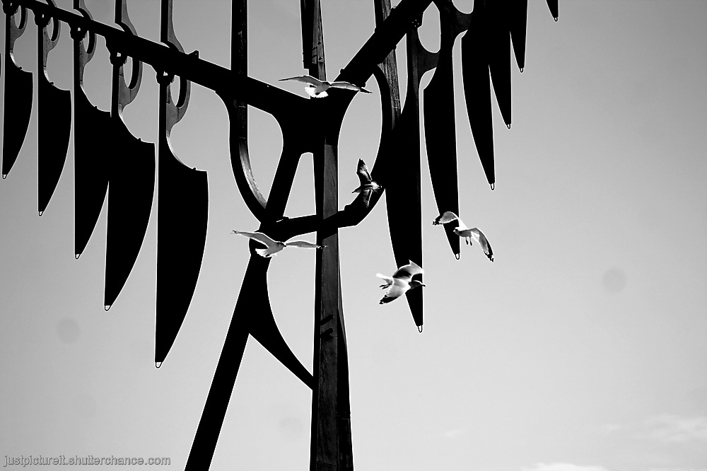 photoblog image With Birds