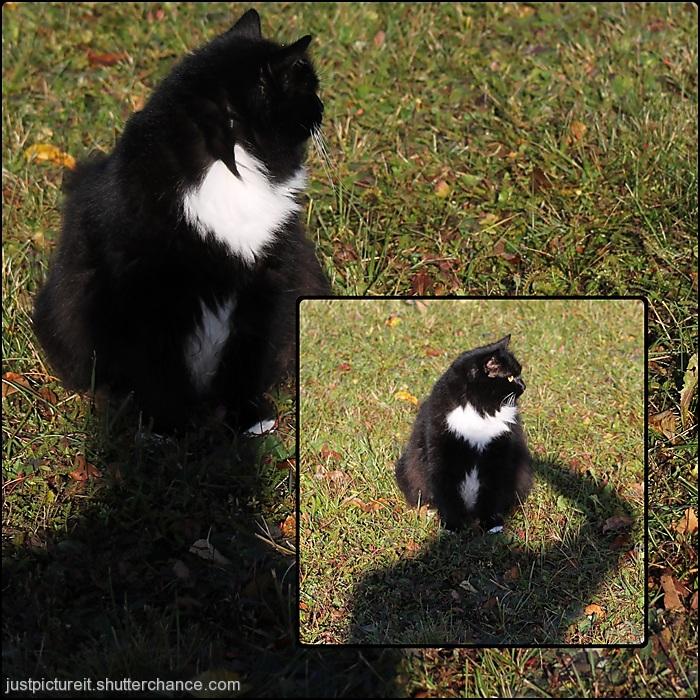 photoblog image Cat Head
