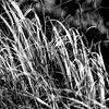October Grasses