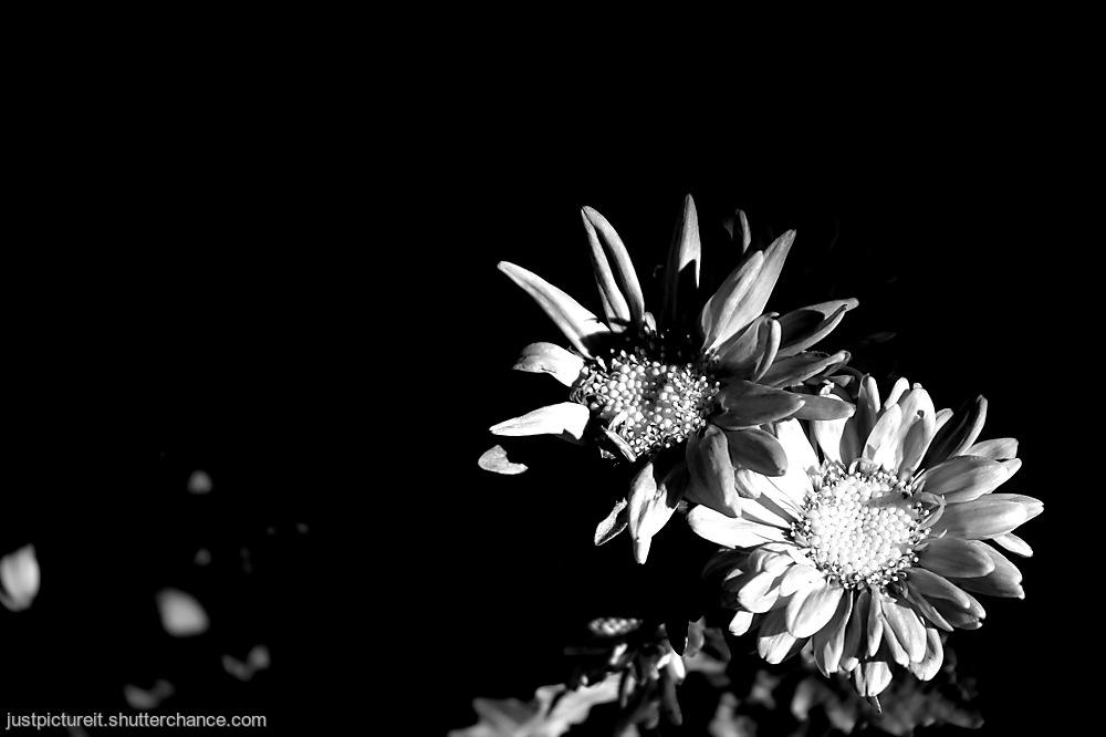 photoblog image Hiding in the Dark