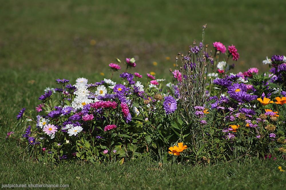 photoblog image Flowers on Friday