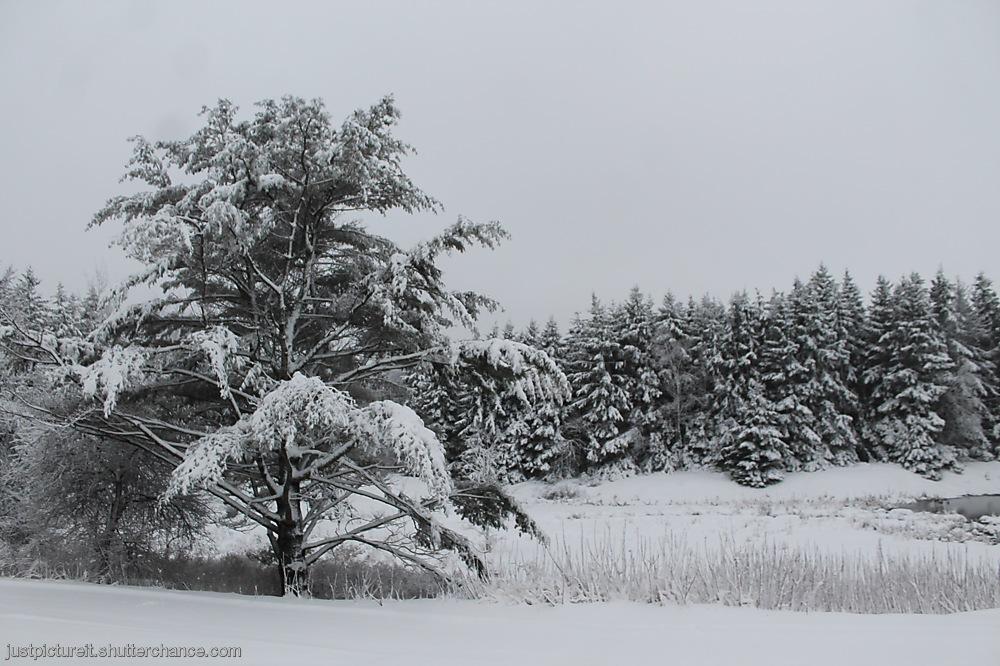 photoblog image Snow Day 1