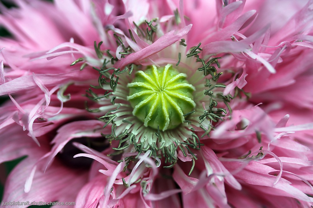 photoblog image Summer Frock