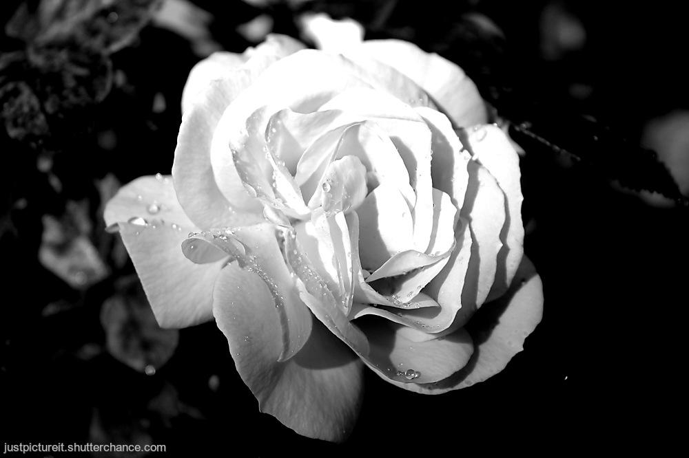 photoblog image Sniff Deep