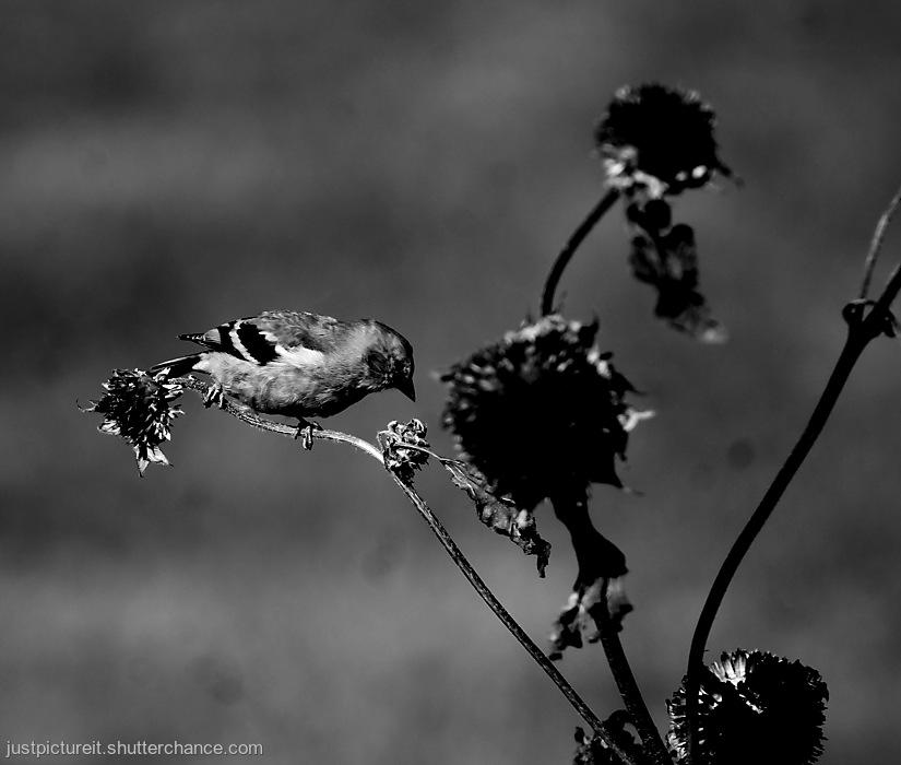 photoblog image Third Bird