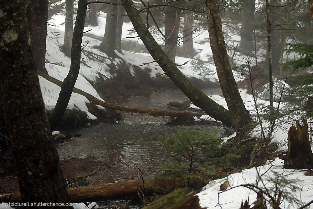 photoblog image Forest Fabulousness