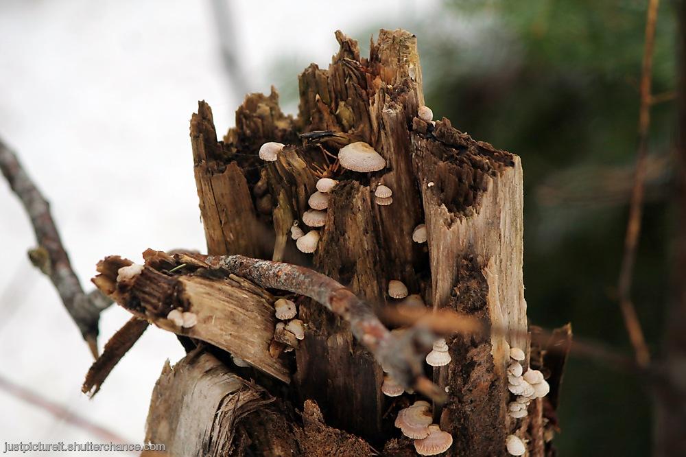 photoblog image Forest Friday