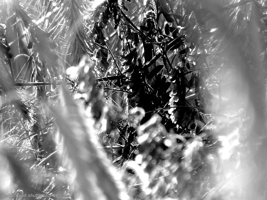 photoblog image Nature's Hidey Holes