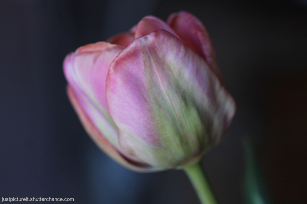 photoblog image Floral Display