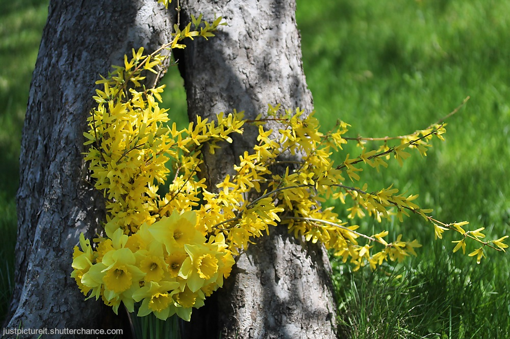 photoblog image May Bouquet