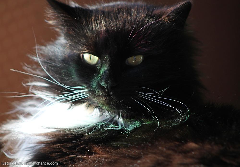 photoblog image Wearin' of the Green