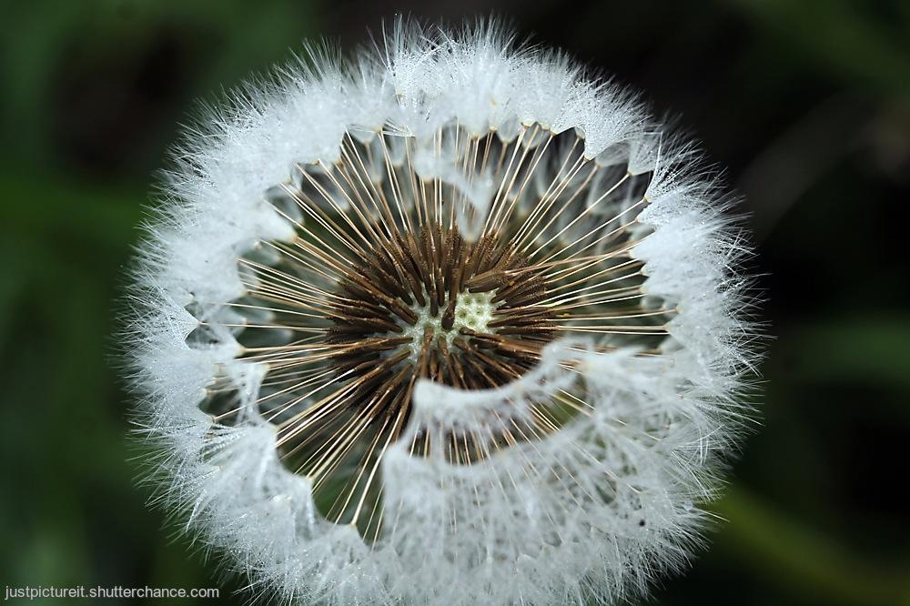 photoblog image Free the Seeds