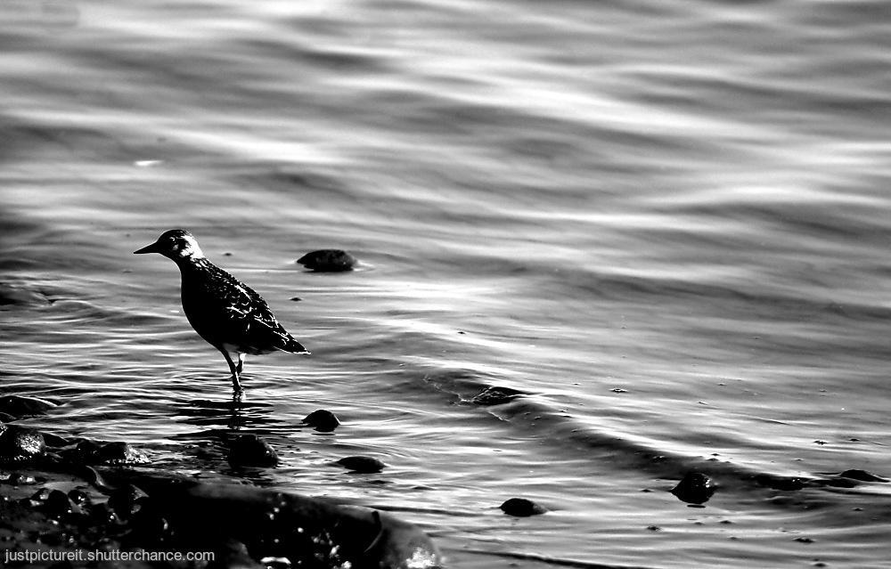 photoblog image Liquid